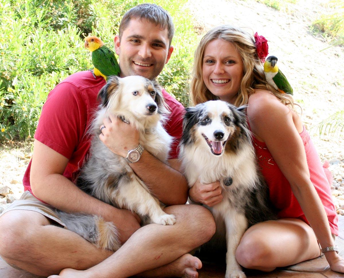 Pets At Home Dog Grooming